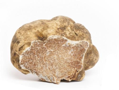 White truffle italian truffle