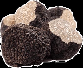 barolo black truffles