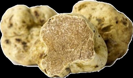 la morra white truffles