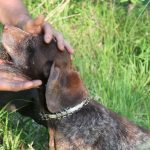 truffle hunt la morra