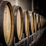 wine tour Barolo cellar