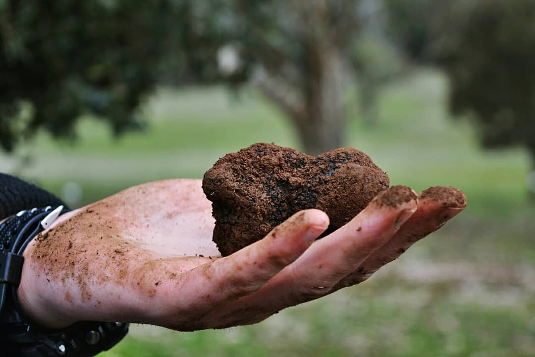 Why are truffles so expensive - black truffle