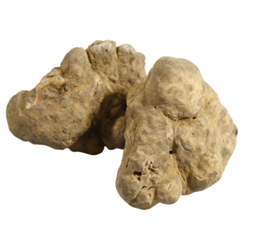 alba white truffle magnatum pico