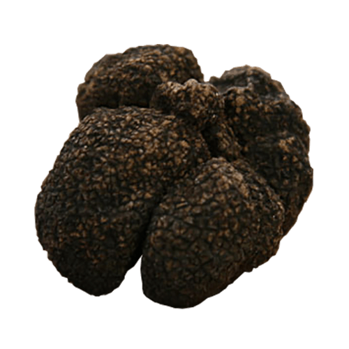 Moscato Truffle - Tuber Brumale Moschatum de ferrry
