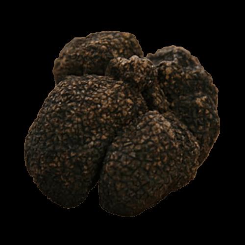 Moscato Truffle - Tuber Brumale Moschatum de ferrry