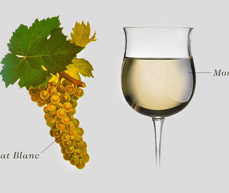 Moscato Wine grape