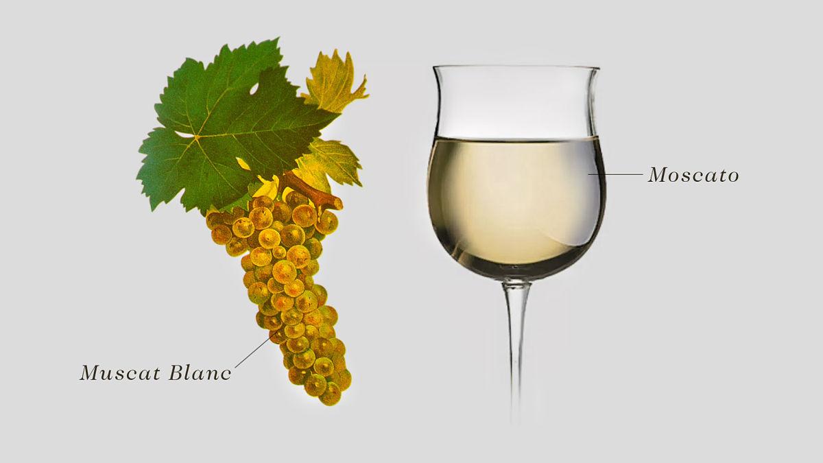 Moscato Wine grape
