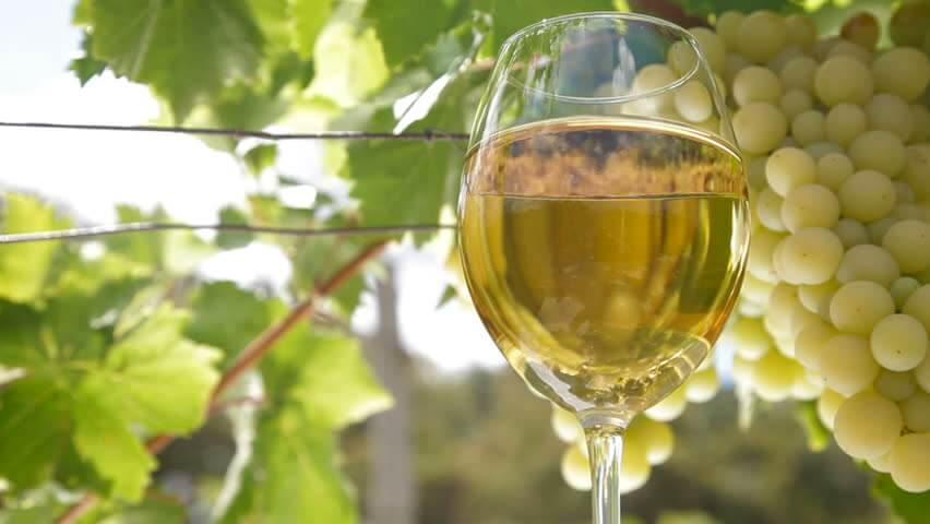Moscato wine Asti