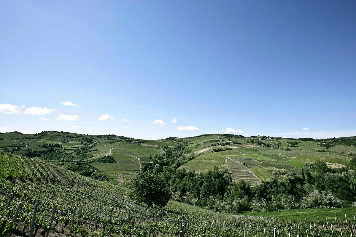 monferrato wine tour