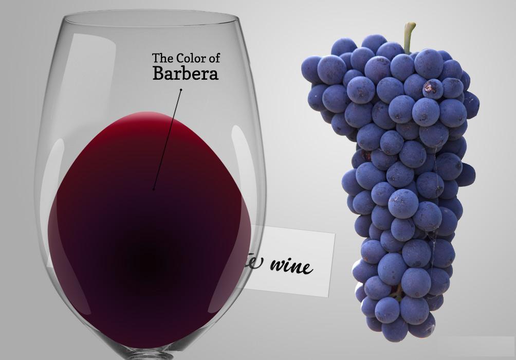 Barbera wine tour experience description