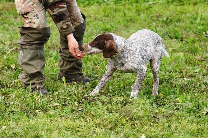Truffle hunting tour with dog